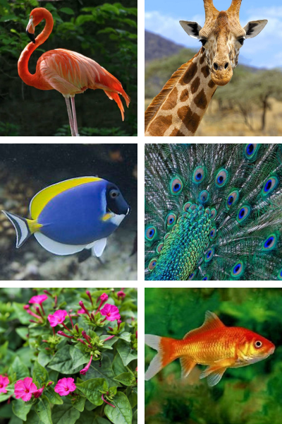 associations de couleurs animaux